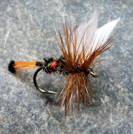 royal coachman dry fly